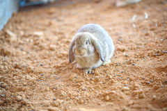 Rabbit. A rabbit in the nick Stock Image