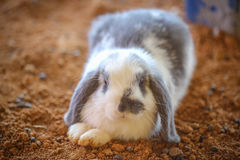 Rabbit. A rabbit in the nick Stock Photo