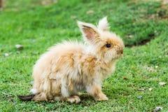 Rabbit in nightsafari chiangmai Thailand Stock Photography
