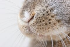 Rabbit nose Stock Image