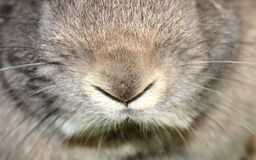 Rabbit nose Royalty Free Stock Photo