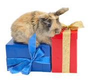 Rabbit On The Boxes With Gifts Stock Image