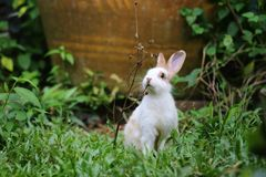 Free Rabbit On The Grass Royalty Free Stock Image - 54046646