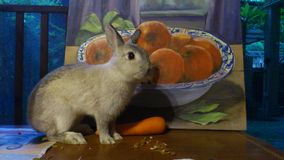 A rabbit and the orange bowl painting Stock Photos