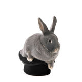 Rabbit out of hat Royalty Free Stock Photo