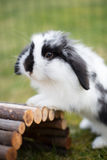 Rabbit outside. A cute rabbit out in the garden royalty free stock photography