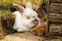 Rabbit pair. A pair of rabbits sleeping at the Spring Sun Royalty Free Stock Images