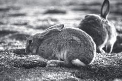 Rabbit in the park royalty free stock image