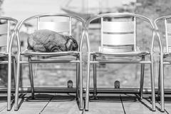 Rabbit on path. Long eared rabbit on steel chairs Royalty Free Stock Photos