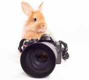 Rabbit photographer. Stock Photos