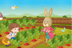 Rabbit picking veggies Stock Photo