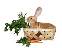 Rabbit picnic Stock Photos