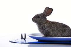 Rabbit in a plate Royalty Free Stock Images
