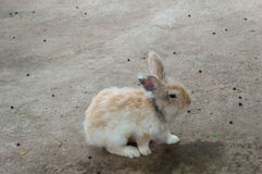 Rabbit played on the ground Stock Image