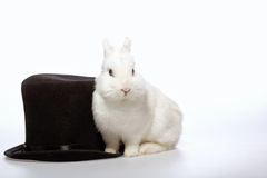 Rabbit playing with a magicians hat Stock Photography