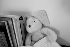 A soft toy rabbit with floppy ears sits with an open book in its hands. A rabbit plush toy sitting leaning against a row of books holding an open book. Black royalty free stock photography