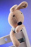 Rabbit Plush toys Royalty Free Stock Photos