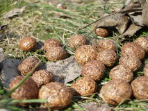 Rabbit poop Royalty Free Stock Images