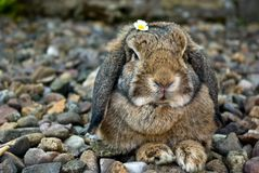 Rabbit portrait Royalty Free Stock Images
