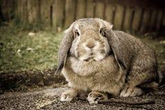 Rabbit portrait closeup in nature Stock Photography