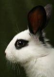 Rabbit portrait Stock Image