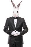 Rabbit posing in a bow tie suit Stock Photos