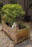 Rabbit pot Royalty Free Stock Images