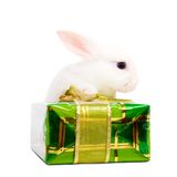 Rabbit with present box Stock Images
