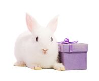 Rabbit with present box Royalty Free Stock Photography