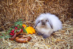 Rabbit with pretzels and pumpkin sitting in straw Stock Photo