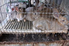 Rabbit prison Stock Photos