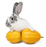 Rabbit with a pumpkin Stock Images