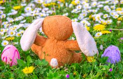 Rabbit puppet and easter eggs on meadow Stock Photo