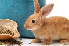Rabbit and rabbit feed Royalty Free Stock Photography