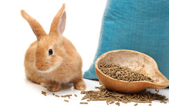 Rabbit and rabbit feed Royalty Free Stock Image