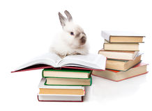 A rabbit is reading a book Royalty Free Stock Photography