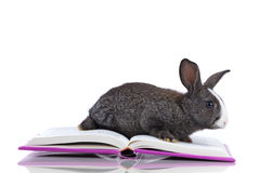 Rabbit reading books Stock Image