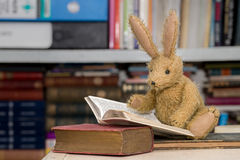 Rabbit reading books, child`s reading, learning concept Royalty Free Stock Photography