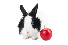 Rabbit with red apple Stock Image