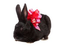 Rabbit with red a bow. Stock Photo