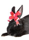 Rabbit with red  bow. Royalty Free Stock Images
