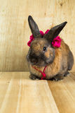 Rabbit red brown color Stock Photo