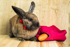 Rabbit red brown color Royalty Free Stock Photos