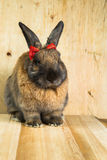 Rabbit red brown color Stock Image