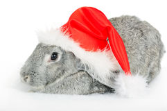 Rabbit in red cap of Santy. Isolated on white royalty free stock image