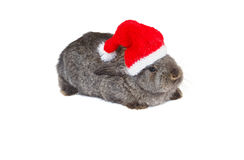 Rabbit in red cap of Santy. Over white royalty free stock photos