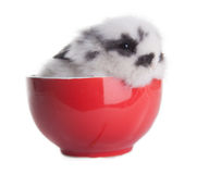 Rabbit in red dish isolated Royalty Free Stock Image