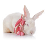 Rabbit with red eyes with a tape. Stock Photos