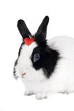 Rabbit with red heart Stock Images