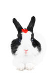 Rabbit with red heart Royalty Free Stock Images